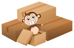 A monkey and boxes Stock Photography
