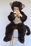 Monkey Boy. Image of cute toddler wearing a monkey costume, eating a banana Stock Images