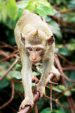 Monkey on branch of tropical tree Stock Image