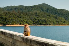 Monkey. A monkey on the brige Royalty Free Stock Photos