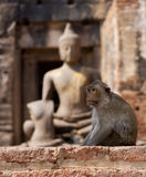 Monkey Buddah Royalty Free Stock Photo