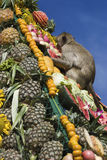 Monkey buffet festival in Thailand. Monkeys are feeding themselves in the annual feast held for monkeys in Lopburi, Thailand. Fruits and vegetables are offered Royalty Free Stock Photo