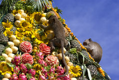 Monkey buffet festival in Thailand. Monkeys are feeding themselves in the annual feast held for monkeys in Lopburi, Thailand. Fruits and vegetables are offered Stock Image