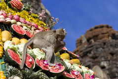 Monkey buffet festival in Thailand Royalty Free Stock Photo