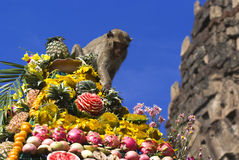 Monkey buffet festival in Thailand. Monkeys are feeding themselves in the annual feast held for monkeys in Lopburi, Thailand. Fruits and vegetables are offered Royalty Free Stock Image