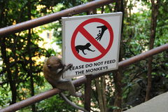 Monkey business Stock Photography
