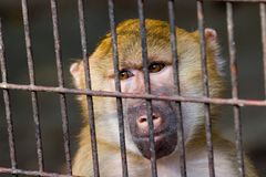 MONKEY IN CAGE Stock Photos