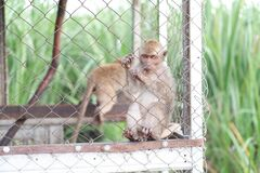 Monkey in a cage with a beautiful style as a background