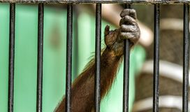 Monkey Cage Stock Photos