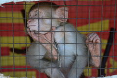 Monkey in the cage. Little tired monkey closed in the cage Royalty Free Stock Photos