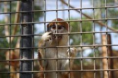 The monkey Stock Image