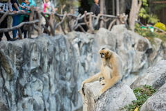 Monkey in cage Stock Images