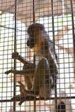Monkey cage Stock Photo