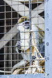Monkey in a cage at the zoo. Monkey in a cage at the zoo Stock Photography
