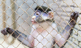 Monkey in a cage in a zoo Stock Images