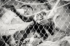 Monkey in the cage at the zoo. Putting his hands through the bars Royalty Free Stock Photos