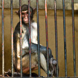 Monkey Cage. Zoo was confined to after flat iron Stock Photo