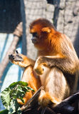 Monkey Cage. Zoo was confined to after flat iron Royalty Free Stock Image