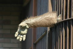 Monkey in captivity. Monkey putting his hand outside the cage Stock Photos