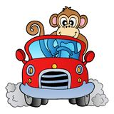 Monkey in car Stock Image