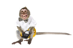 A monkey with a cell phone. A phone is broken!. A monkey with a cell phone, which cut off the key, showing his teeth Stock Images
