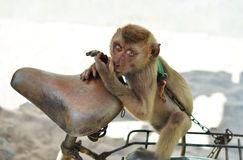 Monkey on a chain Stock Photography