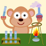 Monkey the chemist Stock Photography