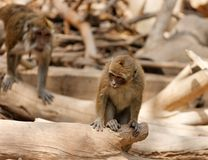 Monkey child sitting on fallen tree Stock Photos