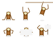 Monkey Chimp Collection Royalty Free Stock Image