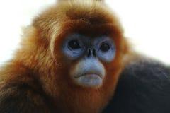 Monkey, China Stock Photo