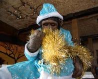 Monkey in Christmas costume Stock Image