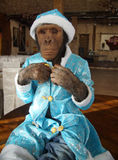 Monkey in Christmas costume Stock Photo