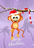 Monkey at Christmas Stock Image