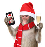 Monkey with christmas santa hat taking a selfie  Stock Image