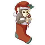 Monkey in Christmas stocking with a candy cane. Cute little brown monkey wearing Santa's hat with holly leaves, sitting in Christmas red stocking and licking Stock Photos