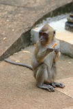 Monkey with a cigarette Stock Image