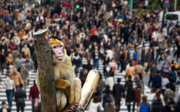 Monkey in city thinks about the future of mankind. Monkey in the city through people thinks about the future of mankind royalty free stock image