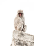 Monkey with clever sad eyes Royalty Free Stock Photos