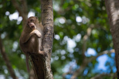 Monkey climb the tree. In the forrest Royalty Free Stock Photo