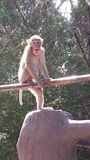Monkey. Climbing on handrails royalty free stock photography