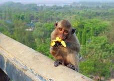 Monkey close up Royalty Free Stock Photography