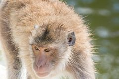 Monkey close-up of nature landscape stock photos