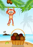 Monkey and coconut Royalty Free Stock Photos