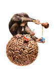 Monkey and coffee Stock Images