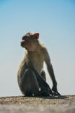 Monkey. Colour image of a monkey facing away from the camera with blur background stock photography