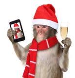 Monkey con el sombrero de santa de la Navidad que toma un selfie y un smilin Imagen de archivo