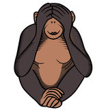Monkey covers its eyes by hands Royalty Free Stock Image