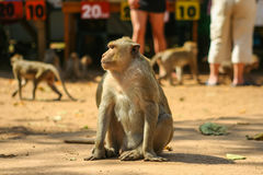 Monkey. Stock Photos