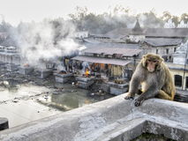 Monkey at cremation ghats Stock Images