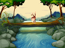 A monkey crossing the river Stock Photography